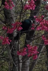 Tui in the Tree